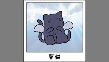 【未確認生物図鑑012】癒しの存在!?翼猫
